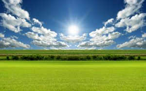 green-grass-the-sun-shines-backgrounds-wallpapers
